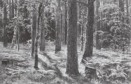 Папоротники в лесу. Сиверская.
