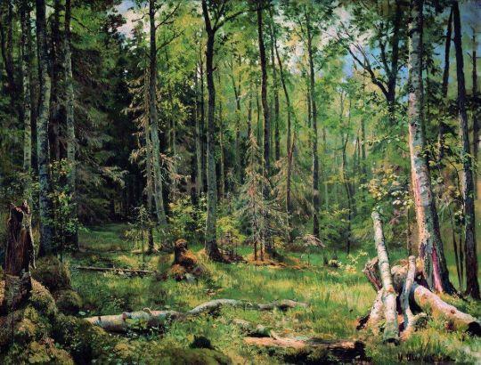 Смешанный лес (Шмецк близ Нарвы).