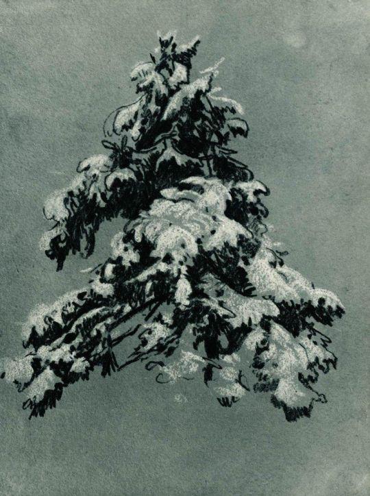 Сосна под снегом.