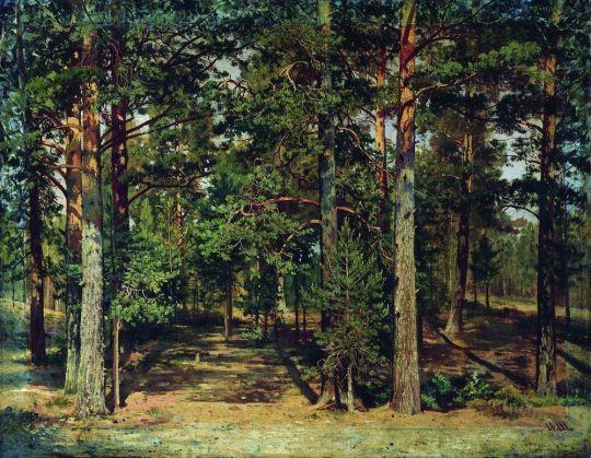 Сосновый лес1.