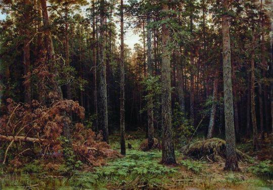 Сосновый лес2