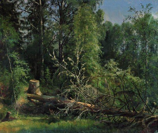Срубленное дерево.
