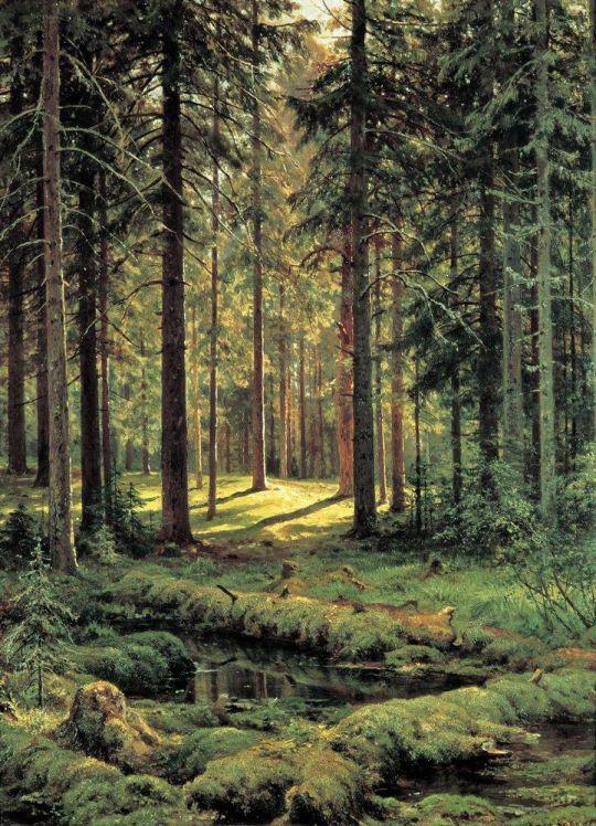 Хвойный лес. Солнечный день.