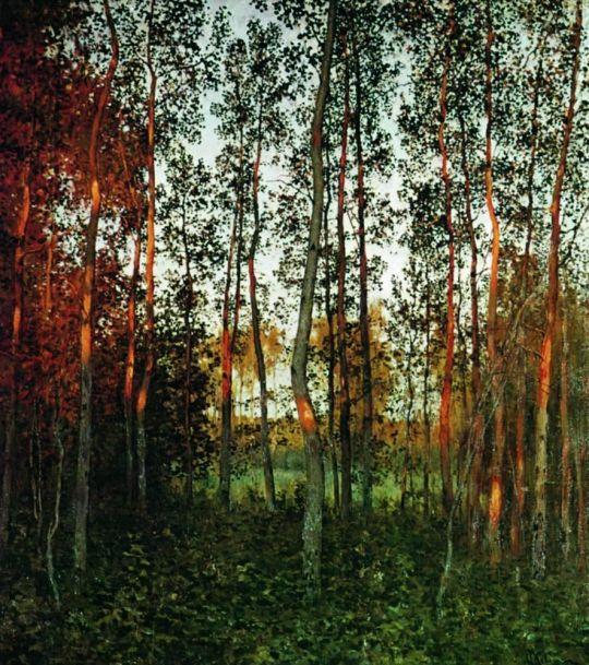 Последние лучи солнца. Осиновый лес.