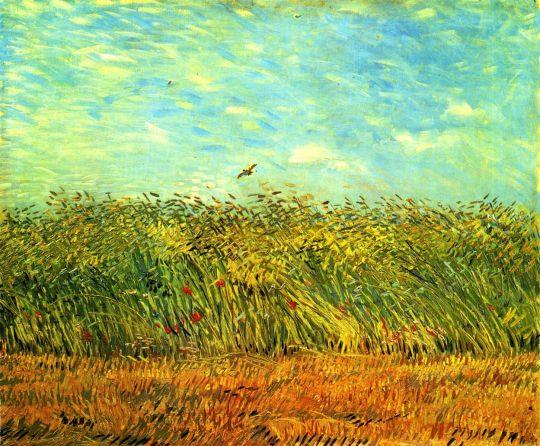 Поле пшеницы с жаворонком