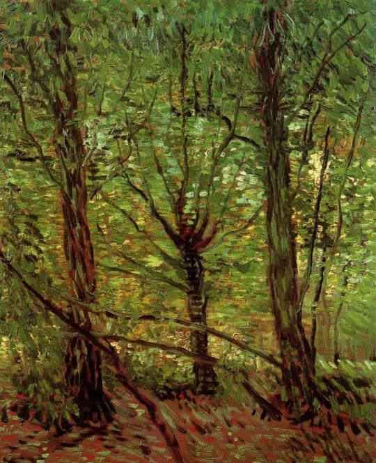 Деревья и Подлесок