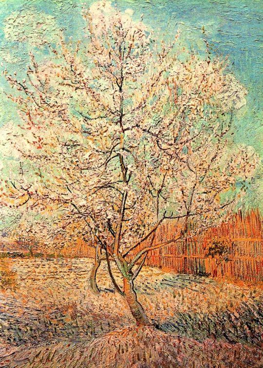 Персики в цвету