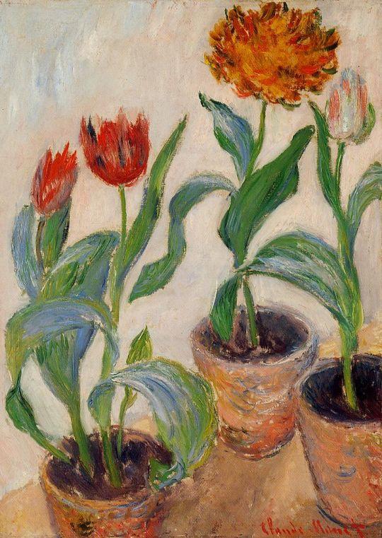 Три горшка с тюльпанами
