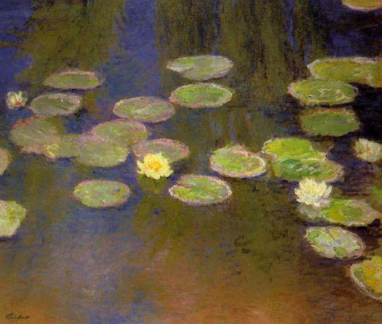Водяные лилии 9