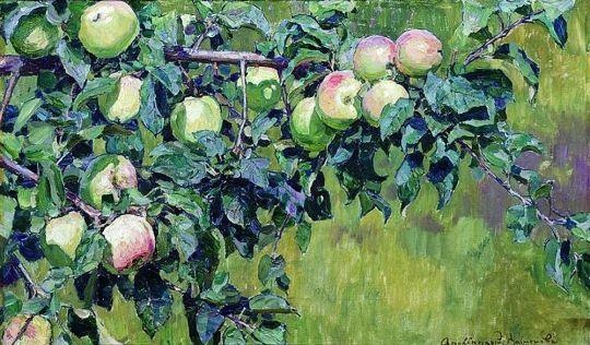 Ветка яблони.