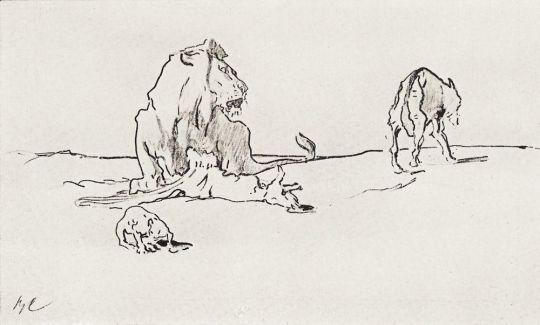 Лев и волк.