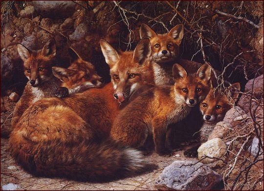 Семейство лисицы на целый дом