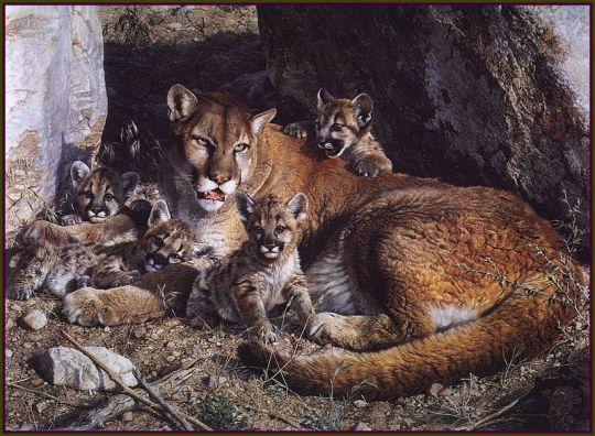 Семейство кугуаров в своем убежище в скалах