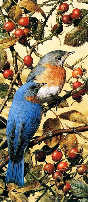Мелкие певчие птицы с синей спинкой