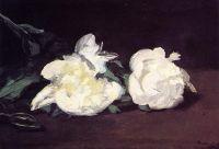 Ветка белых пионов, с садовыми ножницами
