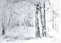 Дорога в лесу.