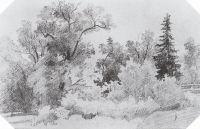 Опушка леса (Еловый лес).