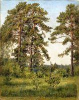 Опушка соснового леса