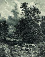 Стадо овец на опушке леса.