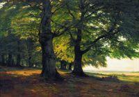 Тевтобургский лес.