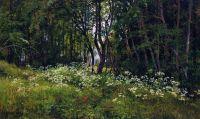 Цветы на опушке леса.