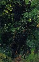 Ствол дуба ранним летом