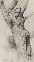 Ствол старого дерева.