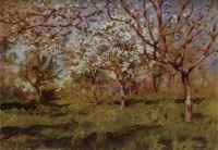 Цветущие яблони2.