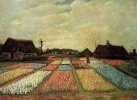 Луковичные поля