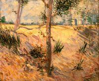 Деревья в поле в солнечный день