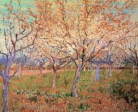 Фруктовый сад с цветущими абрикосами