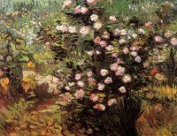 Розовый куст в цвету