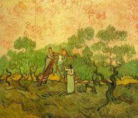 Сбор оливок
