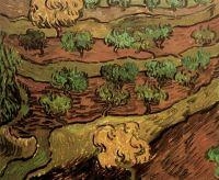 Оливковые деревья на склоне холма