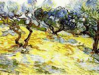 Оливковые деревья и бледно голубое небо