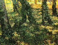 Стволы деревьев овитые плющом