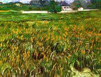 Пшеничное поле в Овере и белый дом