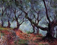 Роща оливковых деревьев в Бордигере