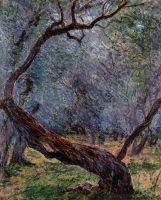 Изучение оливковые деревья