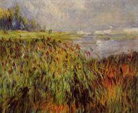 Камыши на берегах Сены