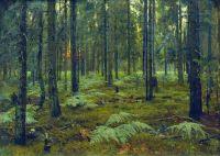 Лес. Папоротники. Закат