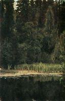 Аленушкин пруд ( Пруд в Ахтырке ).
