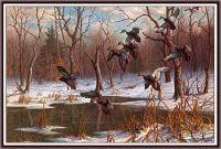 Подарок леса черным уткам