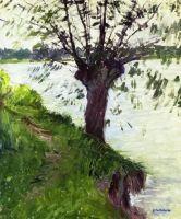 Ива на берегу Сены