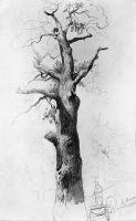 Ствол старого дуба. 1867-1869