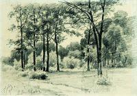 Лес. 1903