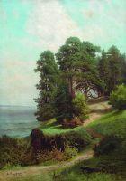 Обрывистый берег. Сосны. 1880-е
