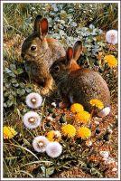 Красочная площадка для игр - Одичавшие американские кролики