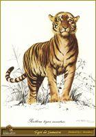 Тигр с Суматры