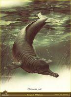 Индийский дельфин